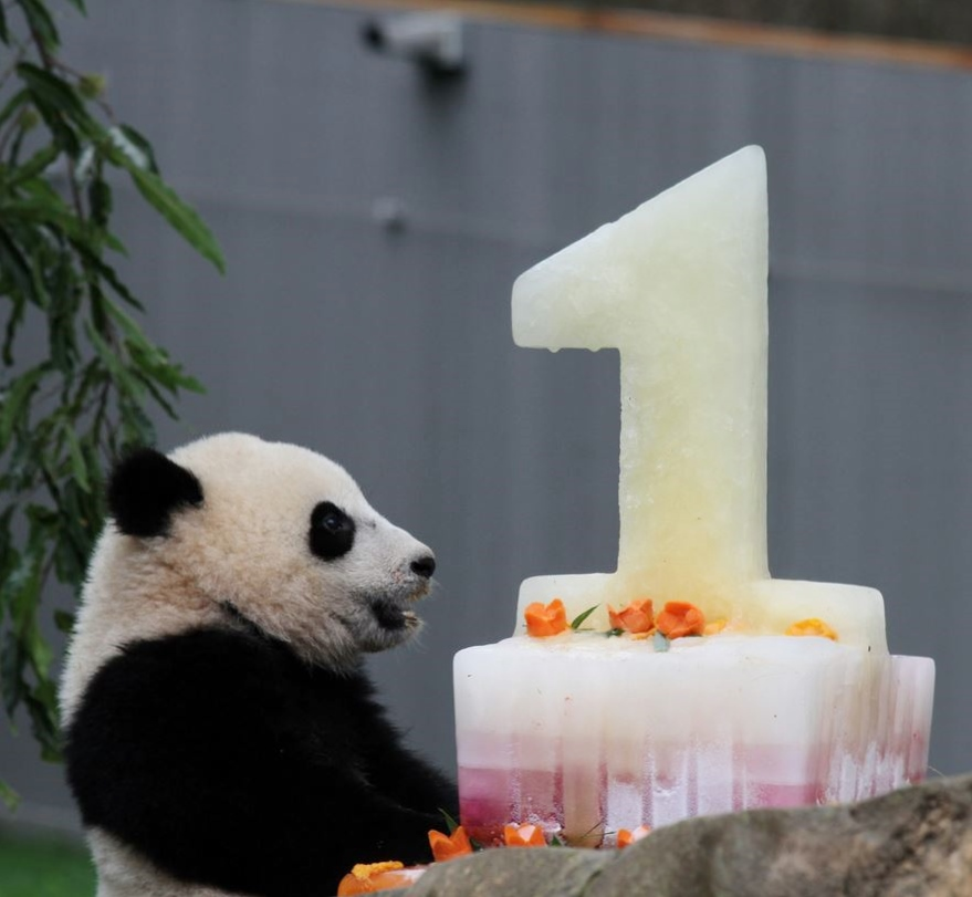 First Birthday Cake for Baby Panda.JPG