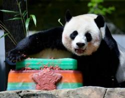 Colorful Birthday Cake for Panda.JPG