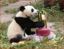 Special bamboo birthday cake for Panda.jpg