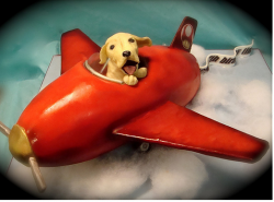 Birthday cake for dog_dog in airplane very unique dog birthday cake picture.PNG