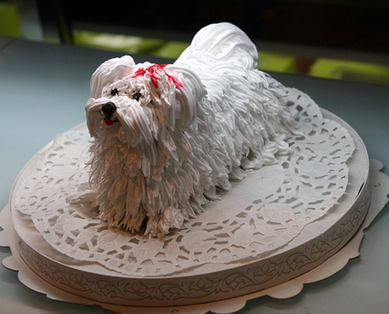 Dog birthday cake of a white cute small dog_what a great dog birthday ...